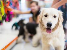 Lakeland Pet Supplies