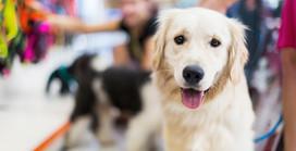Las expresiones de tu perro: la sonrisa que lo dice todo