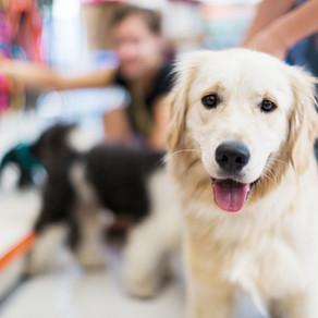 Hou je hond vrolijk en blij