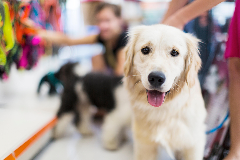 Doggie Daycare (Under 40lbs.)