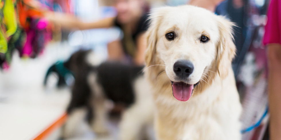 Understanding & Improving your relationship with your dog