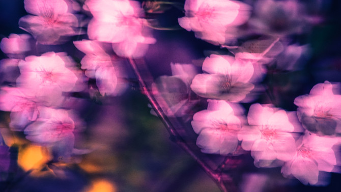 第二话 / Always Sakura / 不变的桜