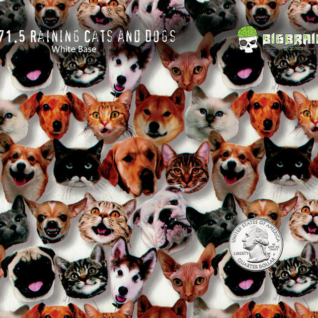 371-Raining-Cats-and-Dogs-Puppies-Kitten