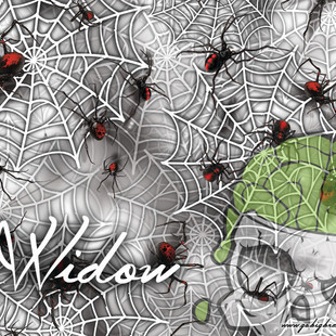 Widow Black Widow Spider White Webs Hydr