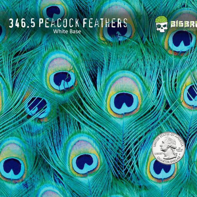 346-Peacock-Feathers-Girl-Woman-Hydrogra