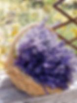 lavender harvest 2019.jpg