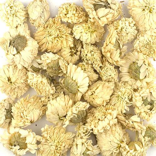 Camomilla romana fiori
