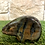 Thumbnail: Orso in Labradorite