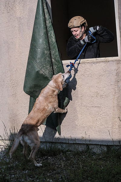 Trinity Hide Spot Superfit Canine.jpg