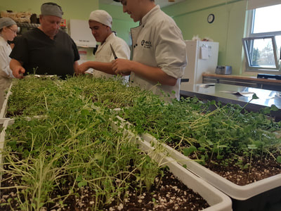 Microgreens grown in the greenhouse are being used by the culinary class