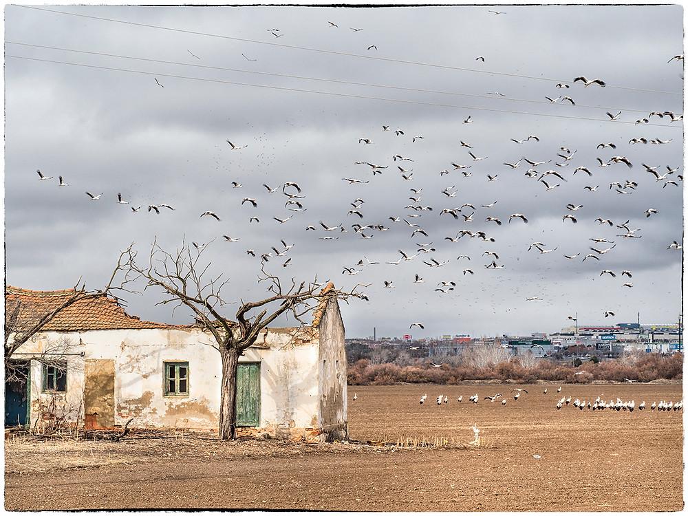 © Esther Henar