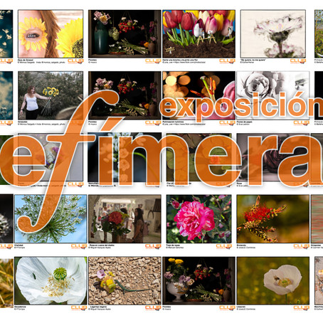 Exposición efímera: flores