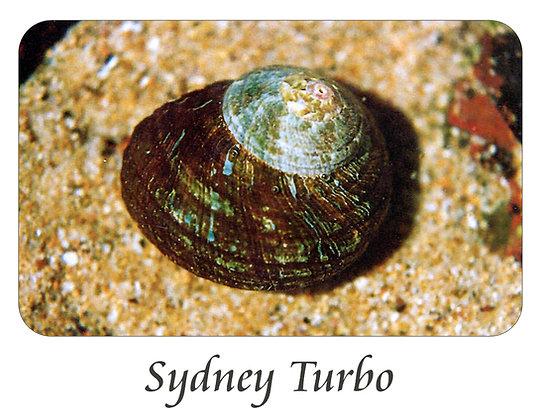 Sydney Turbo Shell