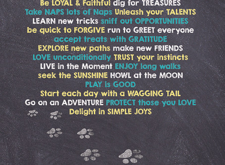The Wisdom of Dogs Lessons from an Old Dog