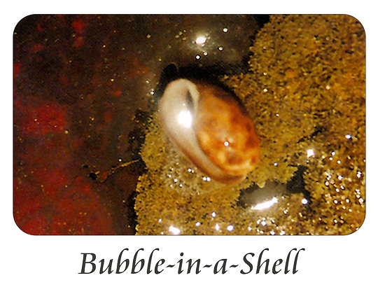 Bubble-in-a-Shell