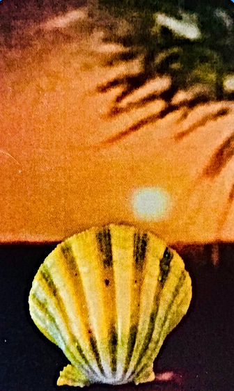 Hawaiian%20moonrise%20scallop%20crd_edit