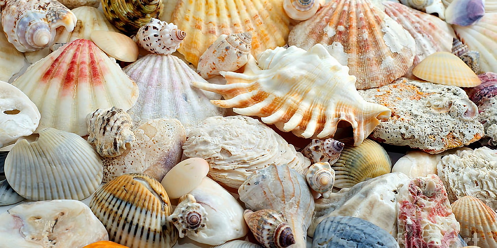 Introduction to Shell Essences Certificate course by NANCY PARKER