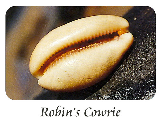 Robin's Cowrie
