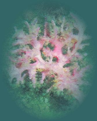 Coral 12: Semperina