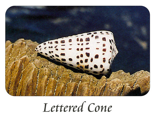 Lettered Cone