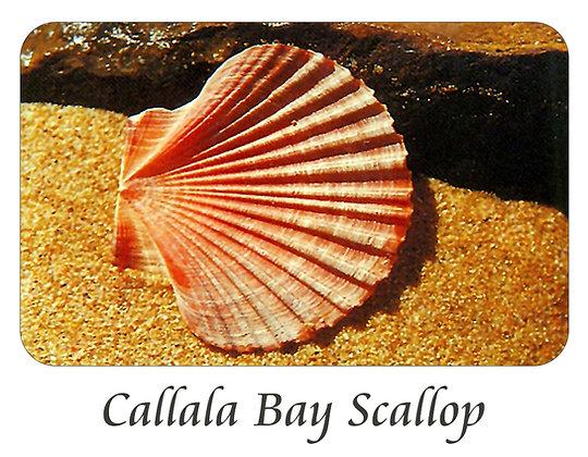 Callala Bay Scallop
