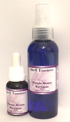 Purple Acorn Barnacle – Stock and Spray.