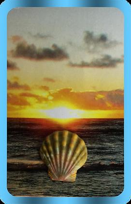 Hawaiian Sunrise Scallop essence
