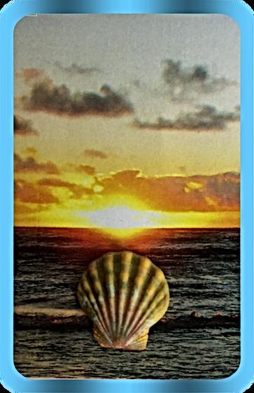 Single HawaiianSunriseScallop copy.png