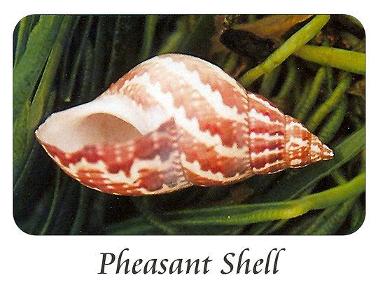 Pheasant Shell