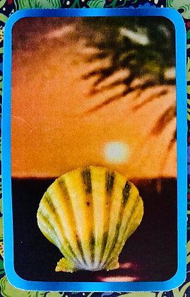 Hawaiian Moonrise Scallop essence