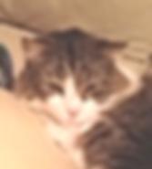 rhonda cat.png