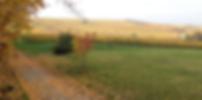 Zwibbelkuche-Wandertag in Bodenheim