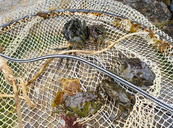 Pêche aux crabes St Malo