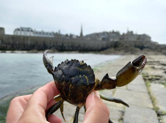 Initiation à la pêche à pied St Malo