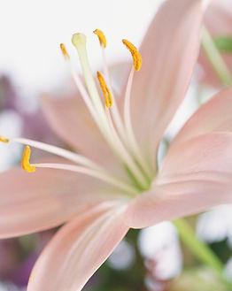 Lily Flower - Sympathy Bouquets