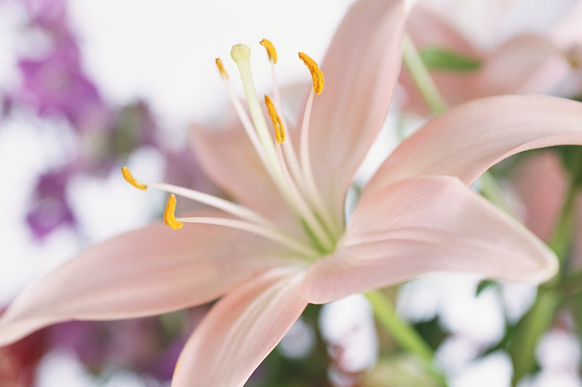 Flower of the month: Lilies