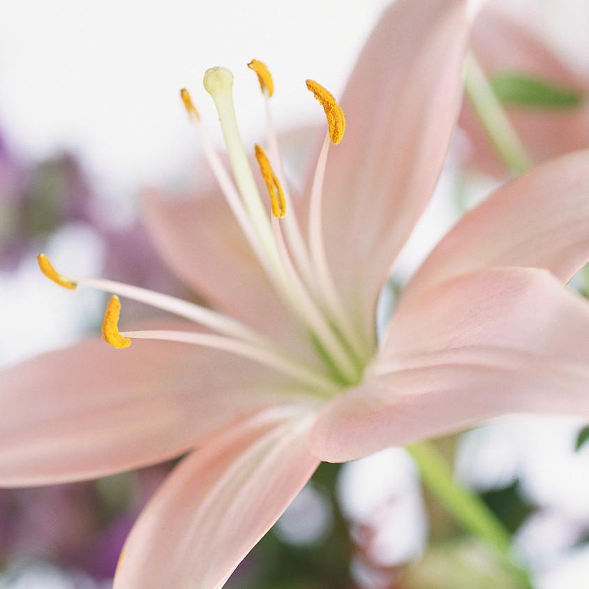 Risveglio energetico con la primavera