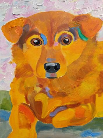 Jesse the Wonder Dog