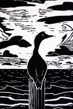 Cormorant at the Pier