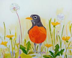 Robin in Dandelions