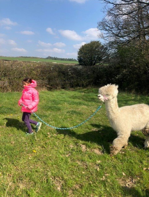 child with alpaca_edited.jpg