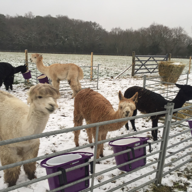 Feed time in the Snow