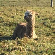 Teddy Edward enjoying life #slowhayesAlp