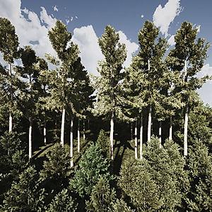 pomnik-stromom.jpg
