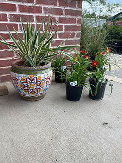 Nursery_Plants_Main.jpg