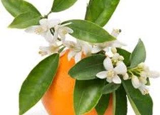 Orange Blossom Honey 1-60 lb. BUCKET
