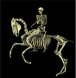 Riding the Skeleton, an inter-species perspective.