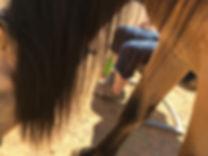 Legs_Beo__.jpg
