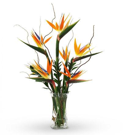avasflowers-birds-of-paradise-bouquet_max.jpg