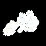 الشعار - طيور السلام.png